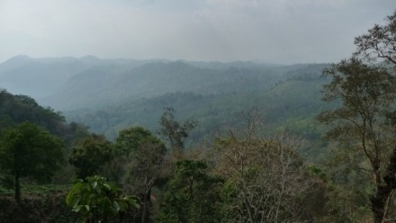 Developing relations: Rethinking Development, Intervention and Dependency Among Nayaka Forest Dwellers in South India