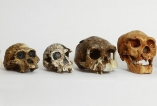 Biological Anthropology Collection